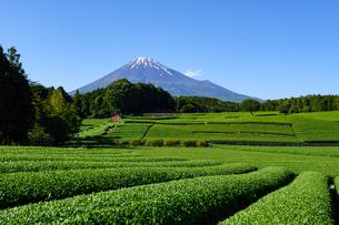 富士市大渕笹場より見た茶畑と富士山の写真素材 [FYI03370226]