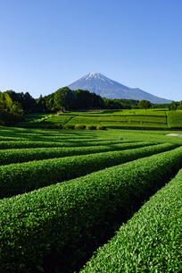 富士市大渕笹場より見た茶畑と富士山の写真素材 [FYI03370248]