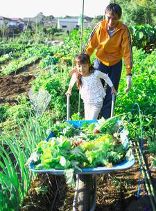 家庭菜園の収穫を手伝う子供の写真素材 [FYI03370348]