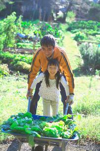 家庭菜園の収穫を手伝う子供の写真素材 [FYI03370350]