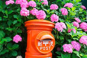 郵便ポストと紫陽花の写真素材 [FYI03370440]