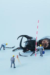 カブトムシを計測する人の写真素材 [FYI03371333]
