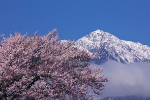 実相寺の桜と甲斐駒ケ岳の写真素材 [FYI03371417]