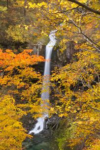 紅葉の曽利の滝 八幡平の写真素材 [FYI03371449]
