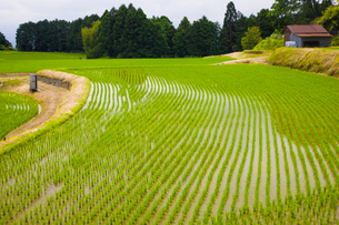 田植えの終った葛城古道の神話の里高天原の写真素材 [FYI03371627]