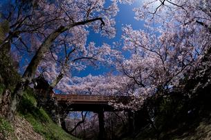 高遠城址公園の桜の写真素材 [FYI03371681]