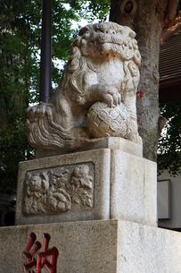 高円寺氷川神社狛犬の写真素材 [FYI03372789]