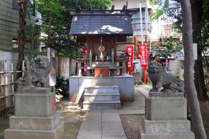 高円寺氷川神社摂社の気象神社狛犬と拝殿の写真素材 [FYI03372792]