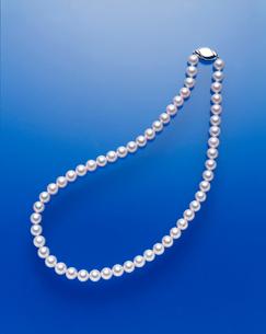 アコヤ真珠のネックレスの写真素材 [FYI03372955]
