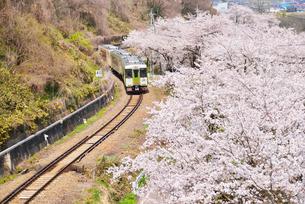 満開の桜とローカル線の写真素材 [FYI03372999]