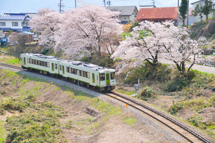 桜並木とローカル線の写真素材 [FYI03373007]