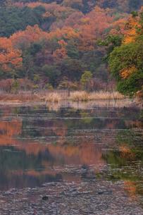 深泥池の紅葉の写真素材 [FYI03373851]