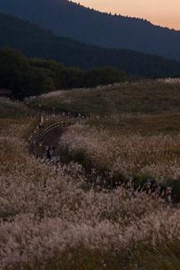 曽爾高原のススキの写真素材 [FYI03373929]