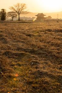 平城宮跡の朝の写真素材 [FYI03374000]