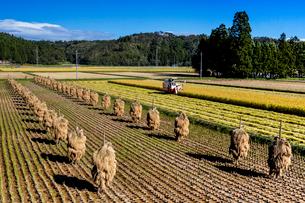 コンバインによる稲刈り作業風景の写真素材 [FYI03374251]