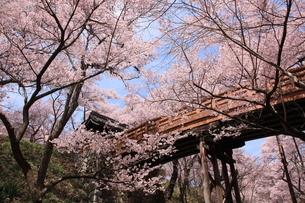 高遠城址公園の桜の写真素材 [FYI03374355]