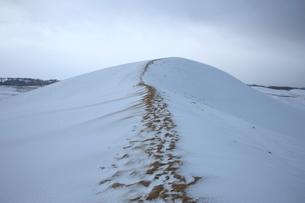 雪の鳥取砂丘の写真素材 [FYI03374427]