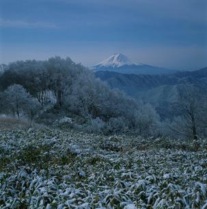 大倉高丸の雪景色と富士山の写真素材 [FYI03374439]