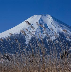忍野村の霧氷と富士山の写真素材 [FYI03374454]
