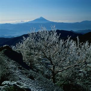 国師ヶ岳の霧氷と富士山の写真素材 [FYI03374477]