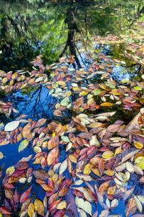 水面の落葉の写真素材 [FYI03374509]