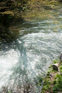 川面の樹影の写真素材 [FYI03374527]