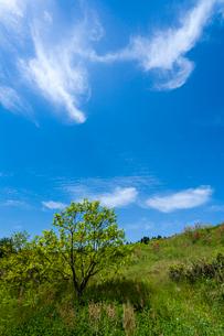 新緑と青空の写真素材 [FYI03374617]