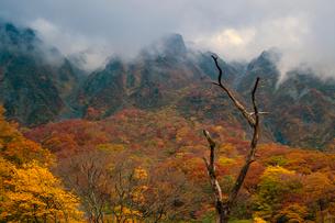 紅葉に染まる北壁の写真素材 [FYI03374691]