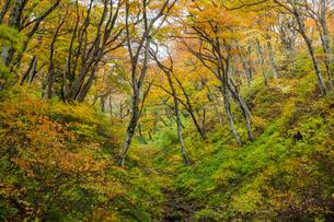 黄葉に覆われる谷間の写真素材 [FYI03374692]