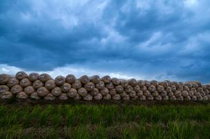 籾殻を詰めたビニール袋と雲底の写真素材 [FYI03374739]