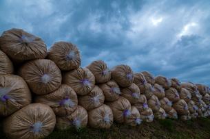 籾殻を詰めたビニール袋と雲底の写真素材 [FYI03374742]