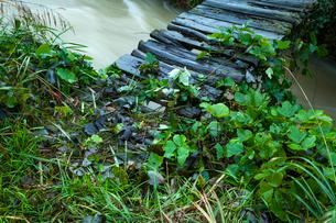 増水した小川と木橋の写真素材 [FYI03374755]