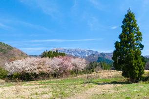 サクラ咲く山里と大山の写真素材 [FYI03374883]