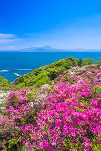 ツツジ咲く五本松公園と大山の写真素材 [FYI03374941]