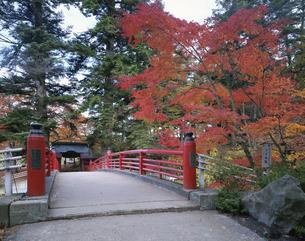 中野紅葉山公園     黒石市 青森県の写真素材 [FYI03375110]