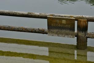 奥松島・水没した柵の写真素材 [FYI03375171]