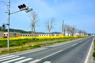 復興の菜の花道と県道240号の写真素材 [FYI03375203]