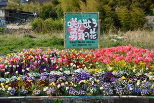 「咲かせよう勇気の花」の花壇の写真素材 [FYI03375216]