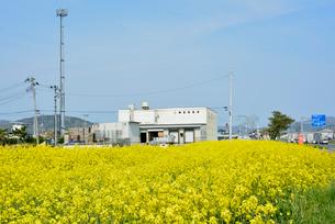復興の菜の花道と再開した水産加工会社の写真素材 [FYI03375217]