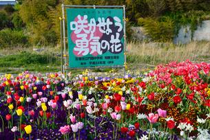「咲かせよう勇気の花」の花壇の写真素材 [FYI03375223]