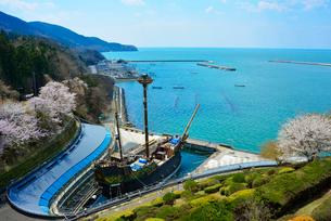 渡波港を望むサン・ファン・バウティスタ号と桜の写真素材 [FYI03375272]