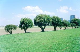 風に揺れる河川敷の立ち木の写真素材 [FYI03375406]