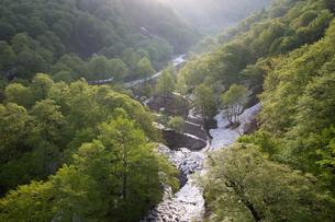 新緑の胆沢川渓谷と残雪の写真素材 [FYI03375455]