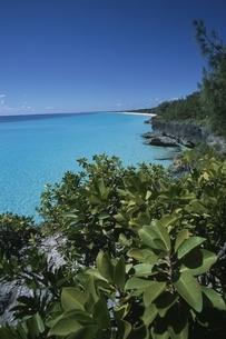 断崖の草木と青空と海 ウベア島 ニューカレドニアの写真素材 [FYI03375460]