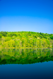 若葉の戸隠の森映す小鳥ヶ池の写真素材 [FYI03375633]