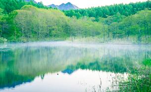 蒸発霧流れる小鳥ヶ池若葉の森と戸隠連峰映すの写真素材 [FYI03375655]