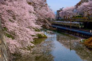山形城桜満開のお堀とローカル線の写真素材 [FYI03375774]