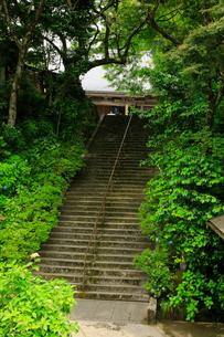 関西花の寺霊場第一番札所 あじさい寺の写真素材 [FYI03375824]