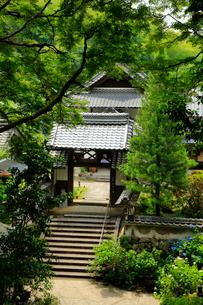 関西花の寺霊場第一番札所 あじさい寺の写真素材 [FYI03375830]
