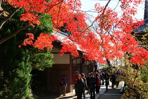 高尾山1合路の紅葉とハイカーの写真素材 [FYI03375837]